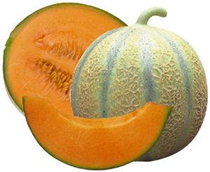 Plant potager bio Demeter melon Bioling