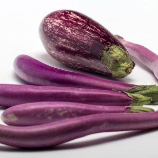 Panaché d'aubergines Bioling Plants bio AB Demeter