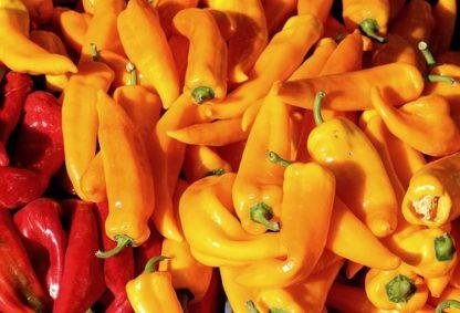 Plants de poivrons piments bio Demeter Bioling 10- Variétés anciennes - Vente directe producteur