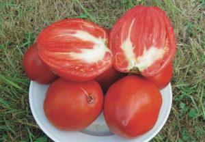 coeur de boeuf Plants bio Demeter expedition - Ferme Bioling