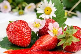 La Ferme BioLing - Envie de fraises- plants fraisiers bio Demeter -