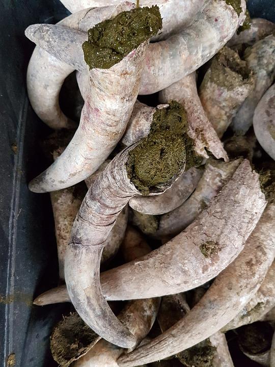 Compost de bouse préparations biodynamiques 500P pépinière de variétés anciennes bio Demeter Bioling