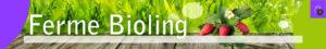 Bandeau2 pépinière de variétés anciennes bio Demeter Bioling