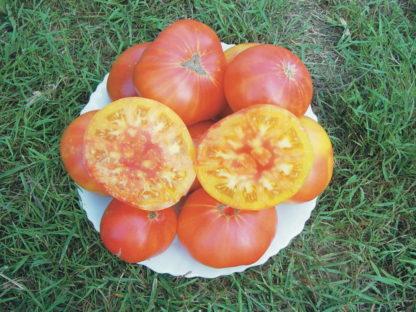 Plants de tomates Ananas Bioling