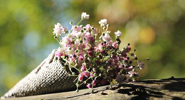 Plants graines variétés anciennes bio Demeter Bioling