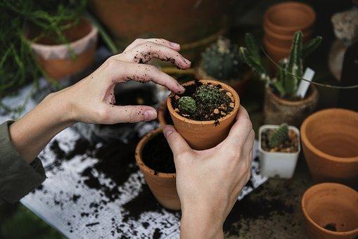 Jardiner avec la lune plantes en pot pépinière de variétés anciennes bio Demeter Bioling