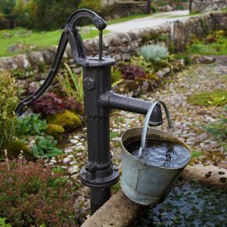 consommer moins d'eau pépinière de variétés anciennes bio Demeter Bioling