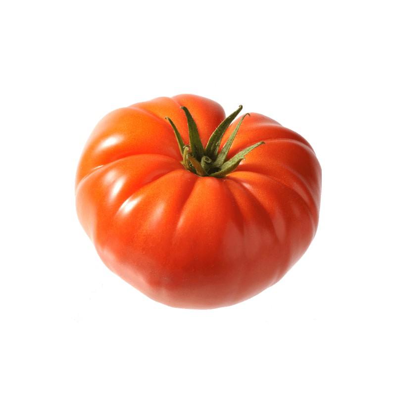 Tomates marmande tomates anciennes pépinière de variétés anciennes bio Demeter Bioling