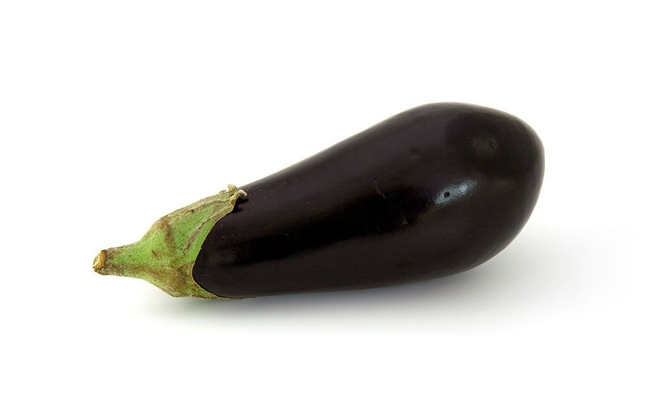 aubergine de barbentane plants pépinière de variétés anciennes bio plants Demeter Bioling2