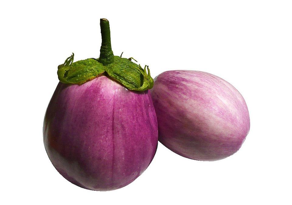 aubergine ronde de valence rose plants pépinière de variétés anciennes bio plants Demeter Bioling2