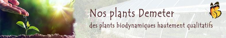 Plants bio Plants Demeter Pépinière en ligne Bioling
