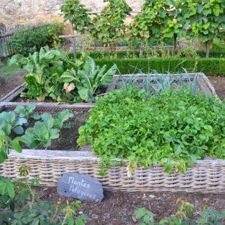 legumes verts tomates anciennes pépinière de variétés anciennes bio plants Demeter Bioling