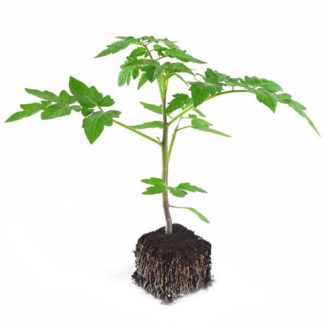 ♥ Plants bio - Plants Demeter