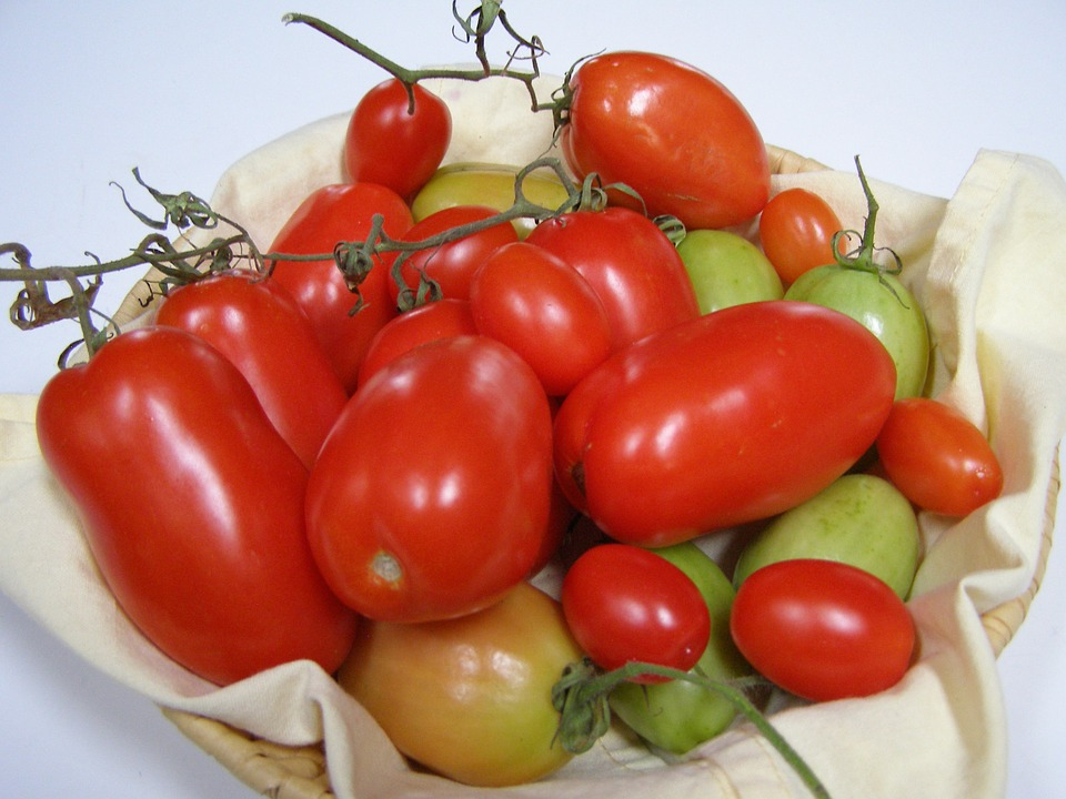 Roma tomates anciennes pépinière de variétés anciennes bio plants Demeter Bioling2